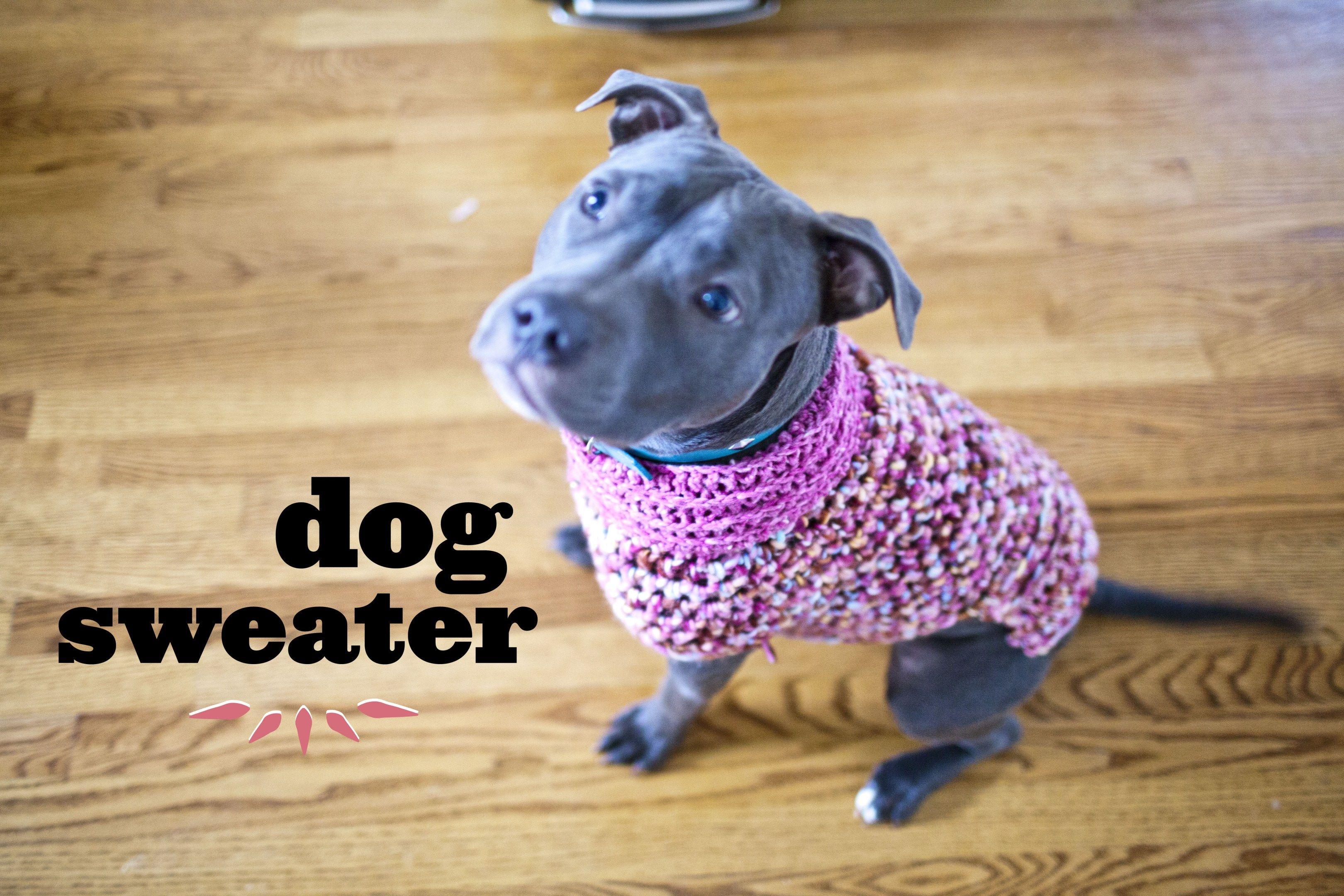 Free Crochet Dog Sweater Patterns Pitbull Sweater Make Great