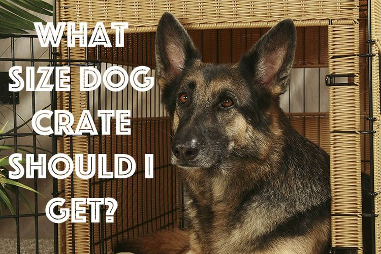 What Size Dog Crate Should I Get