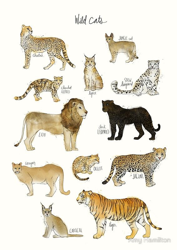 Wild Cats Art Print By Amy Hamilton Cat Art Print Cat Art Cat Posters