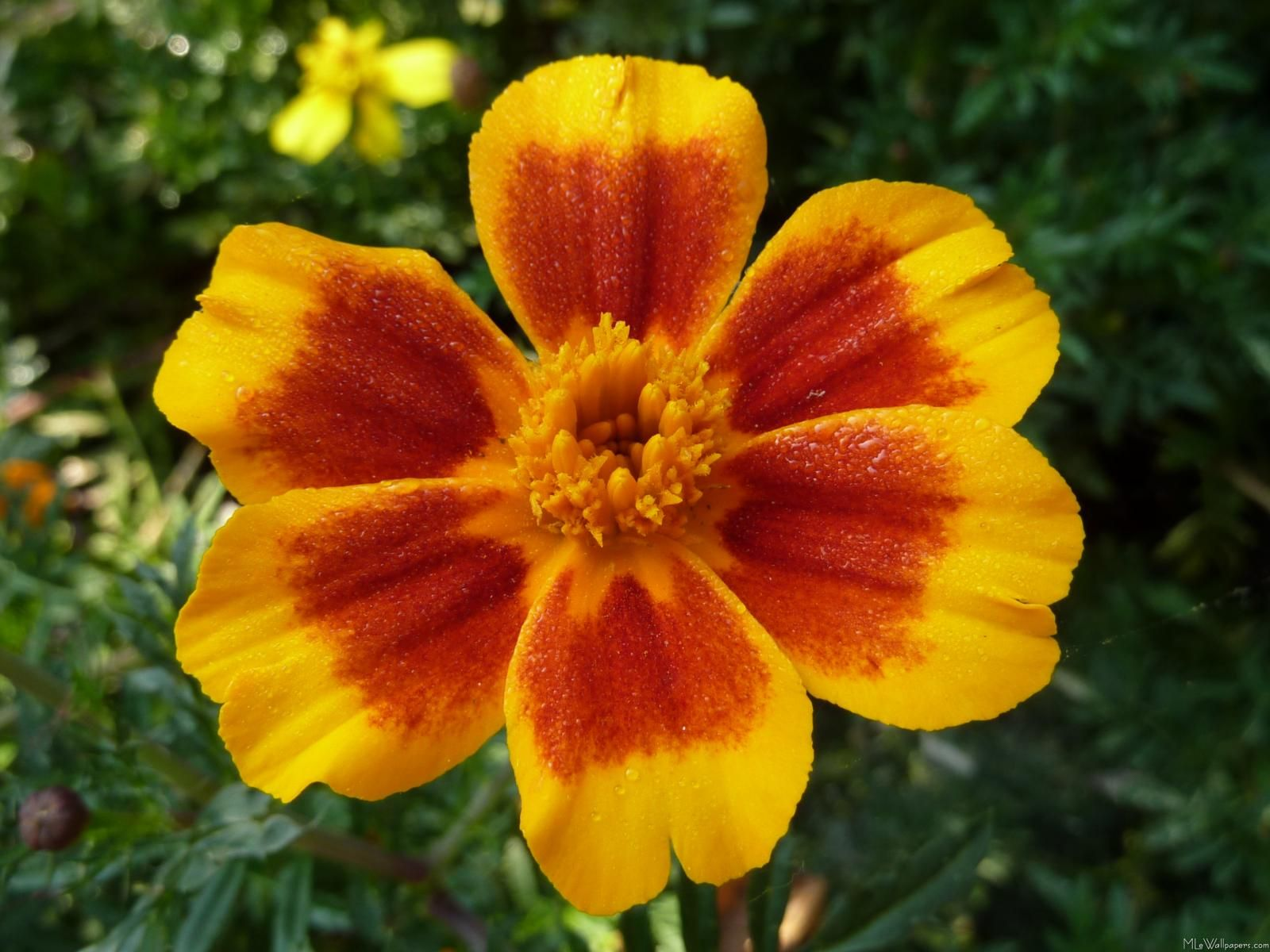 Marigold October Birth Flower Tattoo Ideas Pinterest October