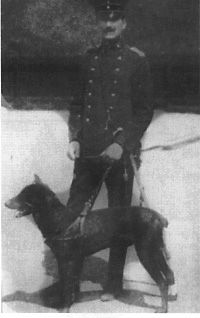 Origins History Of The Dobermann Breed Doberman Dogs Dobermann Pinscher Doberman
