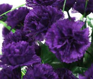 Heirloom Grenadin King Of The Blacks Carnation 20 Seeds Flower Seeds Carnations Dried Bouquet