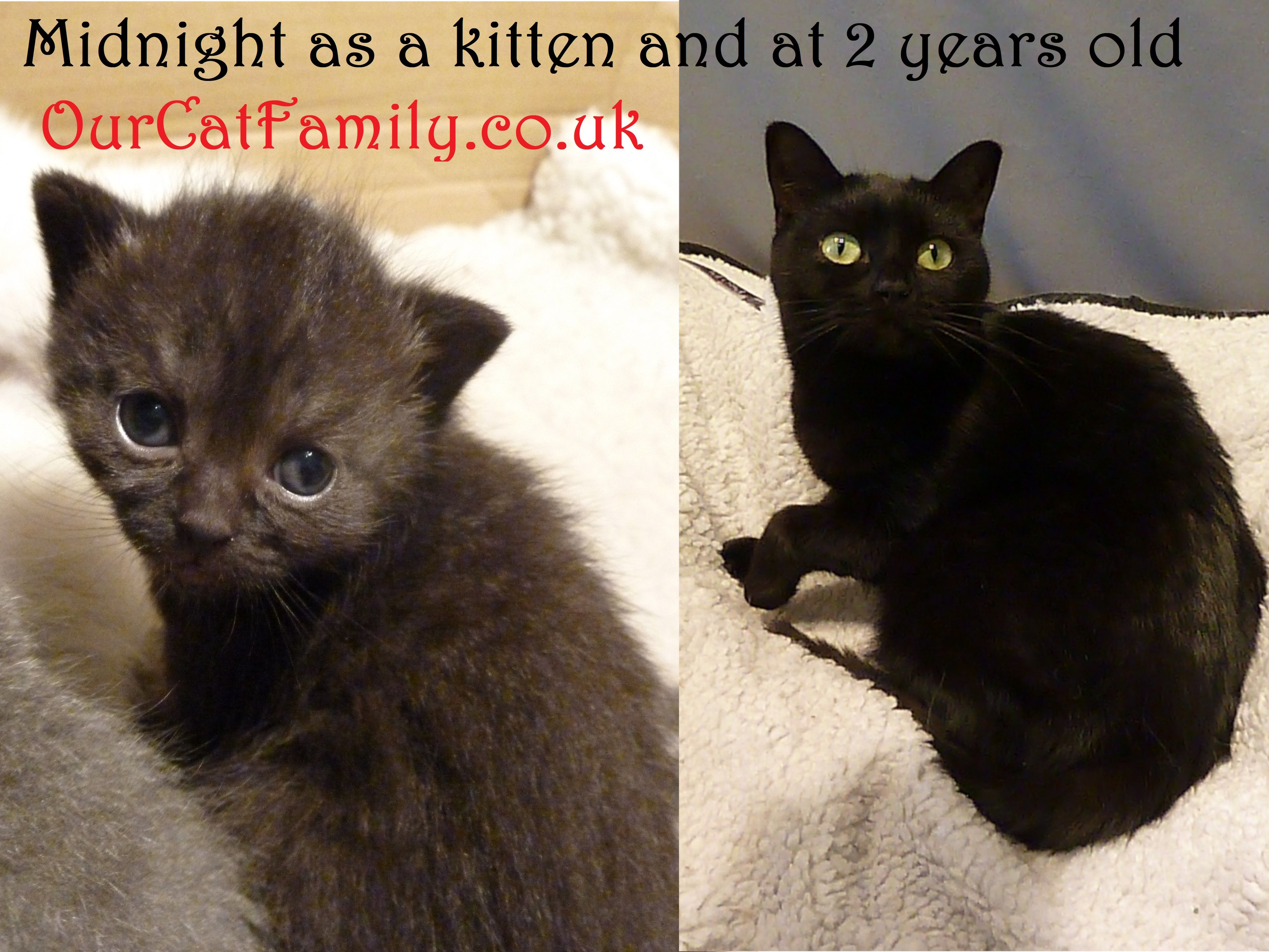 Midnight As A Kitten And At 2 Years Old Ourcatfamily In 2020 Kitten Cat Family 2 Years Old
