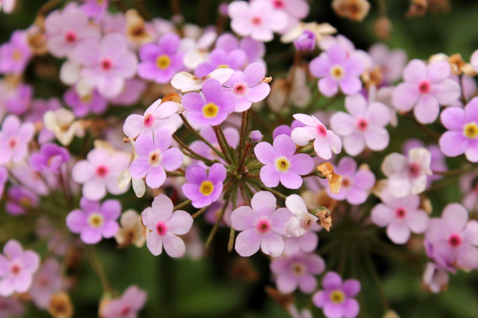 Bodendecker: Die schönsten pflegeleichten Sorten - Plantura