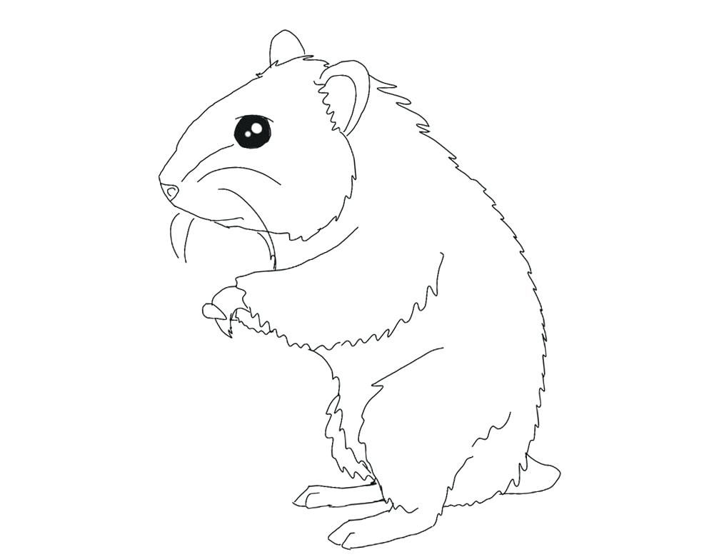 Hamster Coloring Pages Best Coloring Pages For Kids Animal Coloring Pages Coloring Pages Cute Cartoon Characters