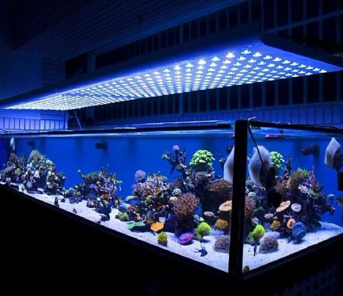 Beautiful And Cool Freshwater Fish Aquarium Decoration Ideas · Aquarium Led LightingLed ... & Beautiful And Cool Freshwater Fish Aquarium Decoration Ideas ... azcodes.com