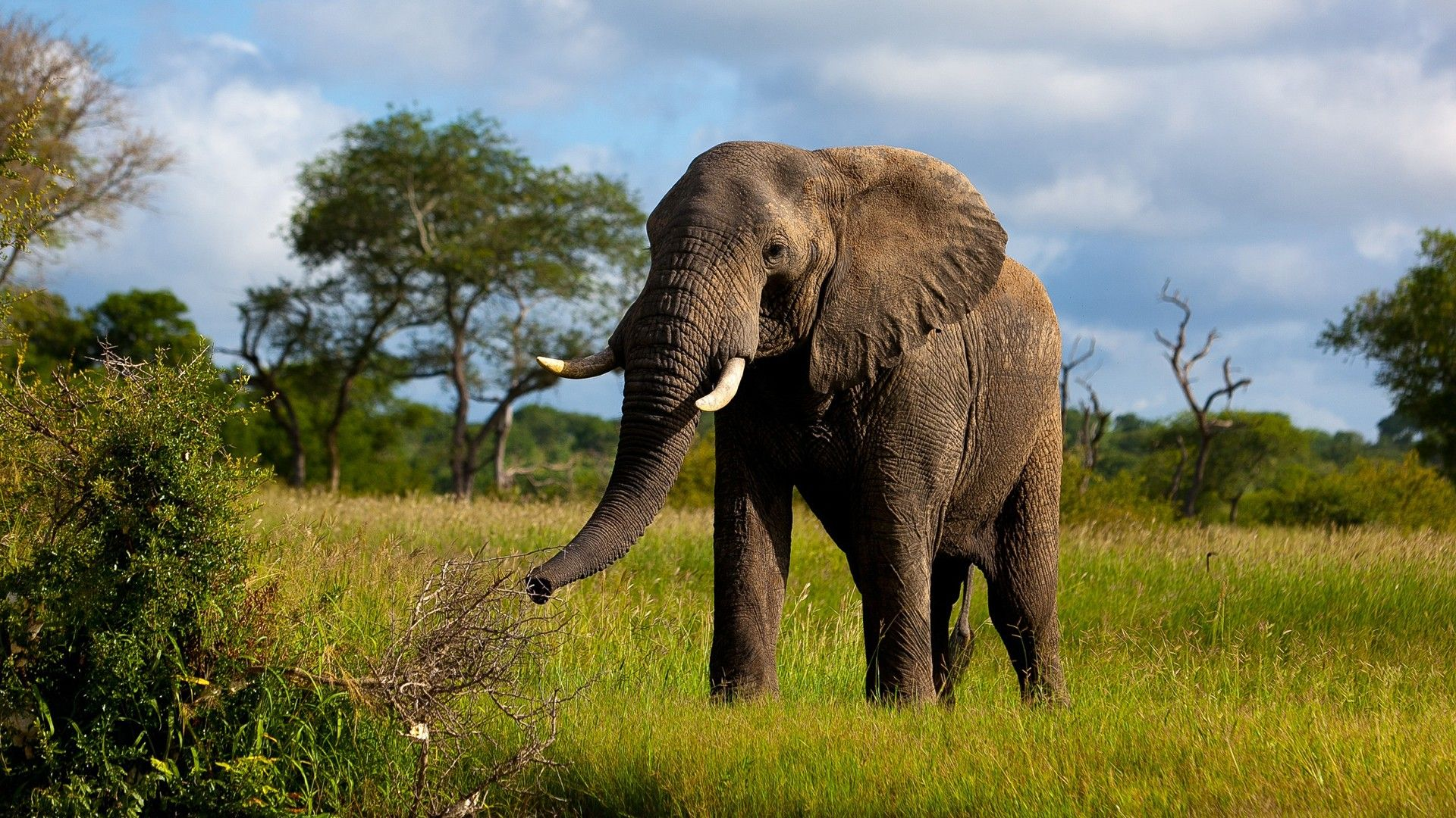Hd wallpaper elephant - Elephant Hd Wallpapers Free Download