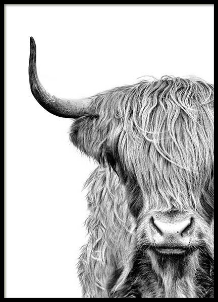 Highland Cow Close Up Affiche dans le groupe Affiches ...