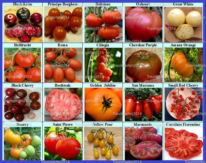die besten 25 tomatensamen alte sorten ideen auf pinterest tomatensamen tomaten pflanzen. Black Bedroom Furniture Sets. Home Design Ideas