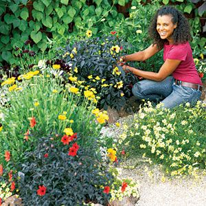 How To Design A Hot Color Flower Garden   Free Planting Plan: Mix Fiery