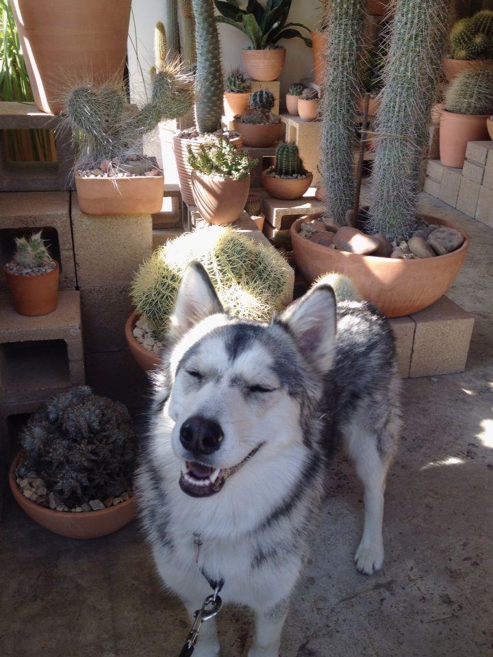Tasha The Cactus Store In Echo Park Puppy Love Puppies Animals