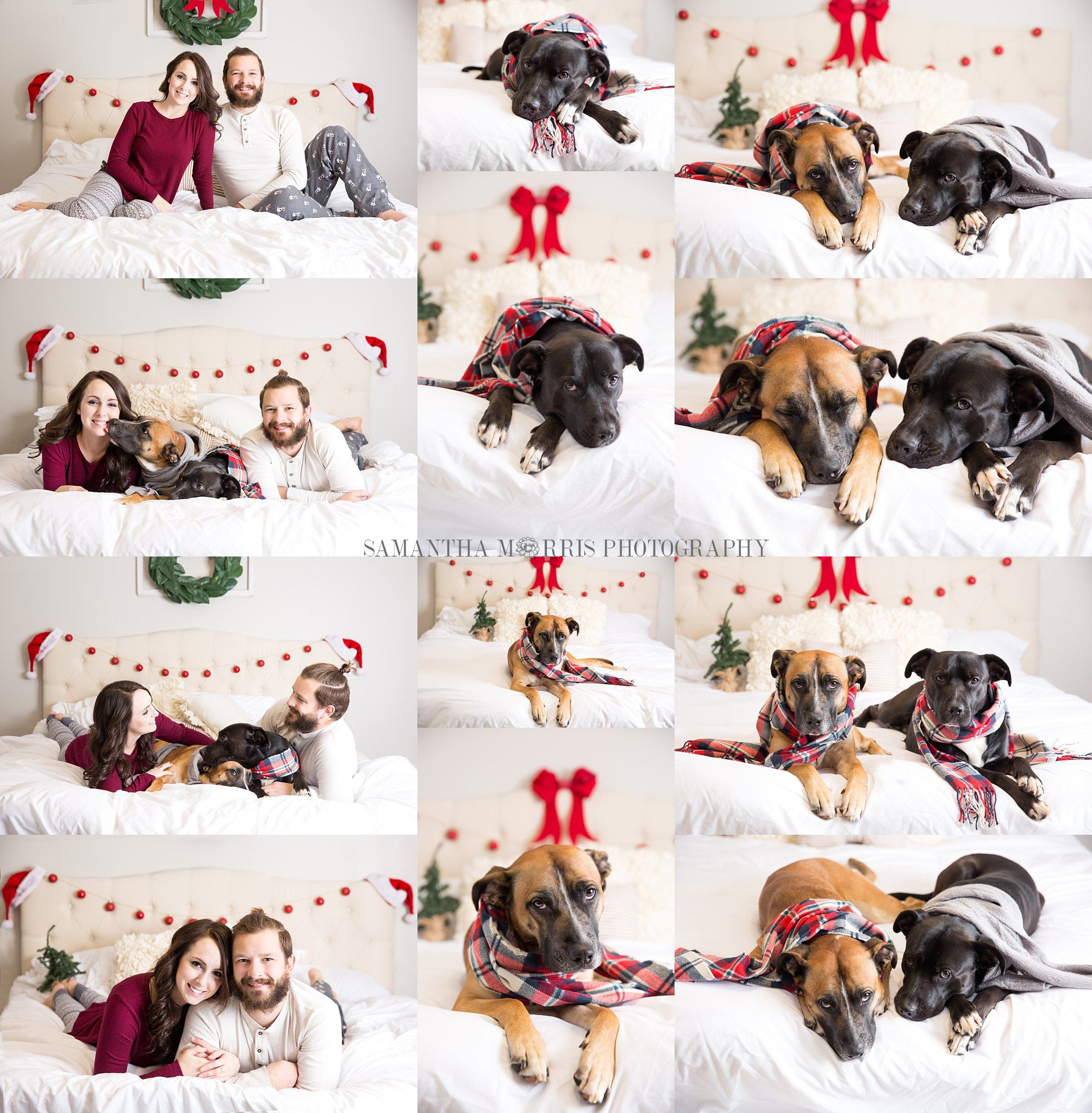 Family Christmas Picture With Dogs