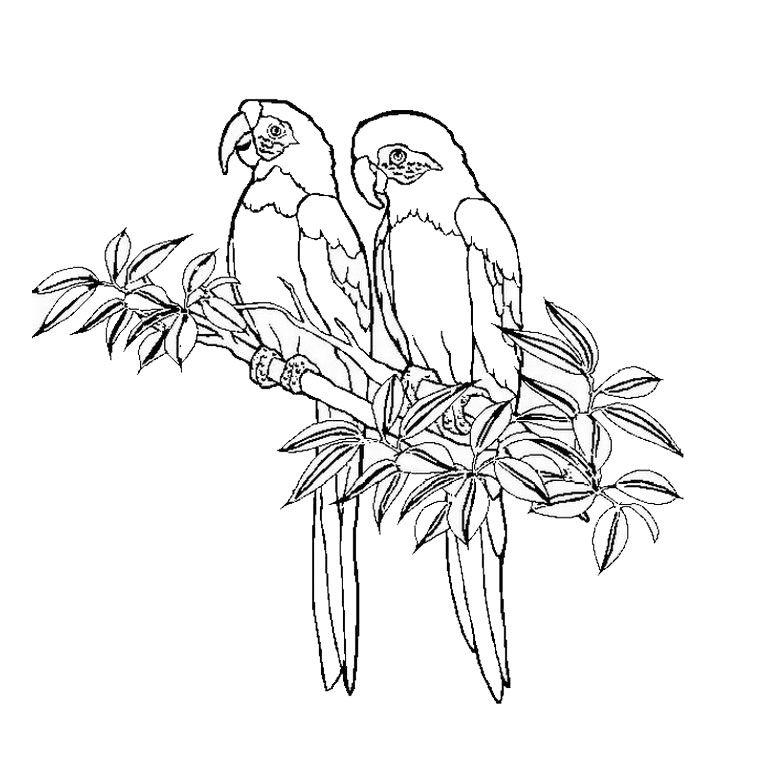 Coloriage Oiseaux Exotiques A Colorier Dessin A Imprimer
