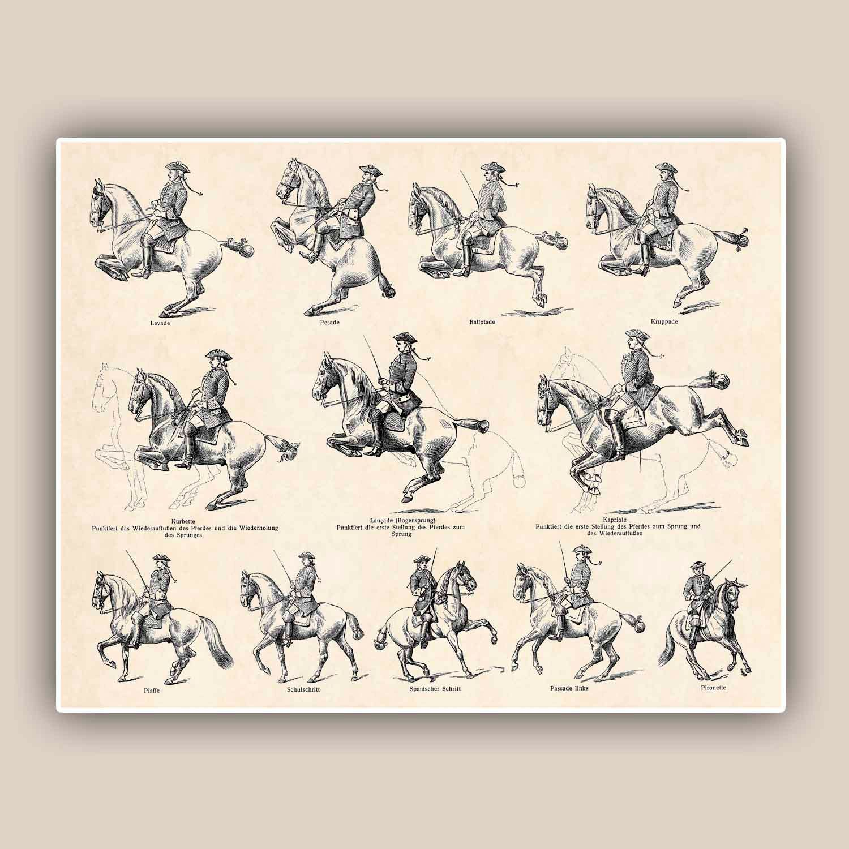 horse riding print antique print horse dressage equestrian