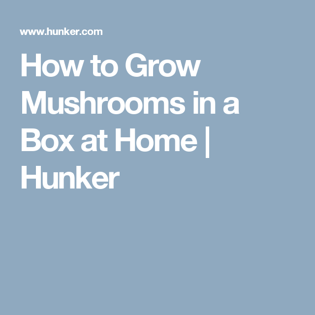 How To Grow And Care For Mushrooms Garden Remove Rust