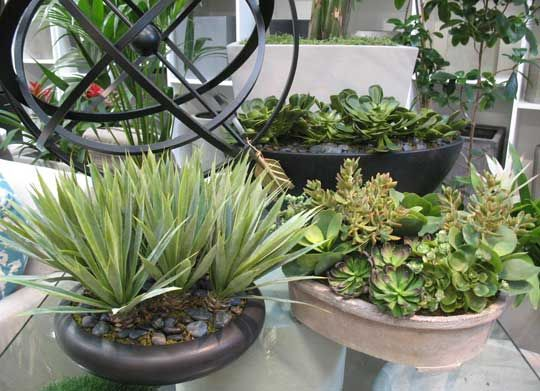 Bedford Brown Has A Large Selection Of Faux Succulents With