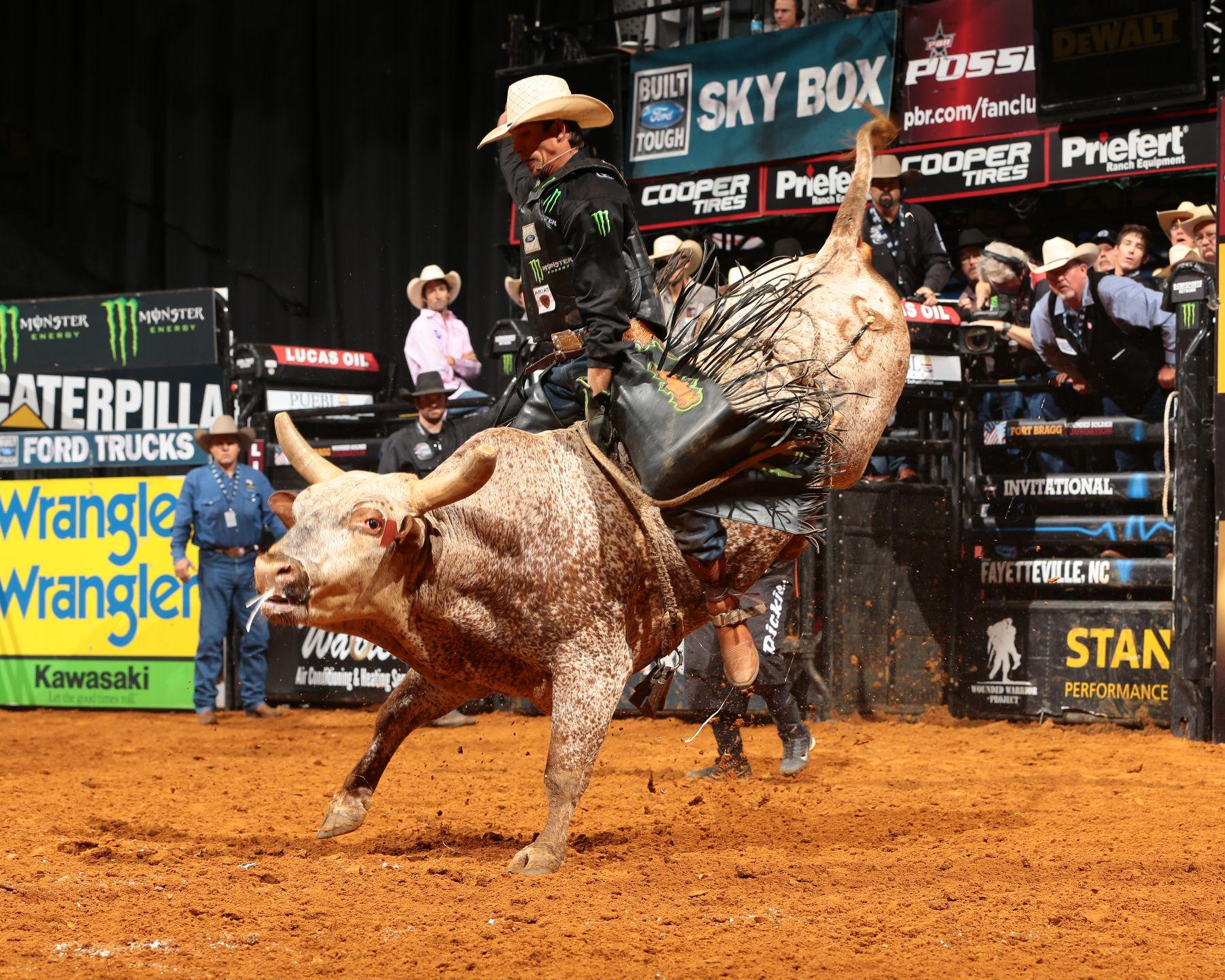 Pbr bull get naked