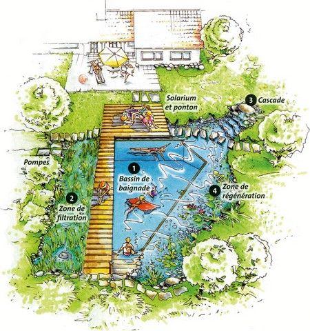 Fonctionnement d 39 une piscine naturelle architecture for Piscine naturel