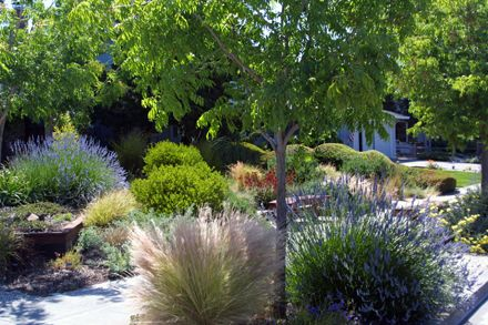 Sustainable Low Water Garden Design In San Jose California Taproot Garden Drought Resistant Landscaping Drought Tolerant Landscape Drought Resistant Plants
