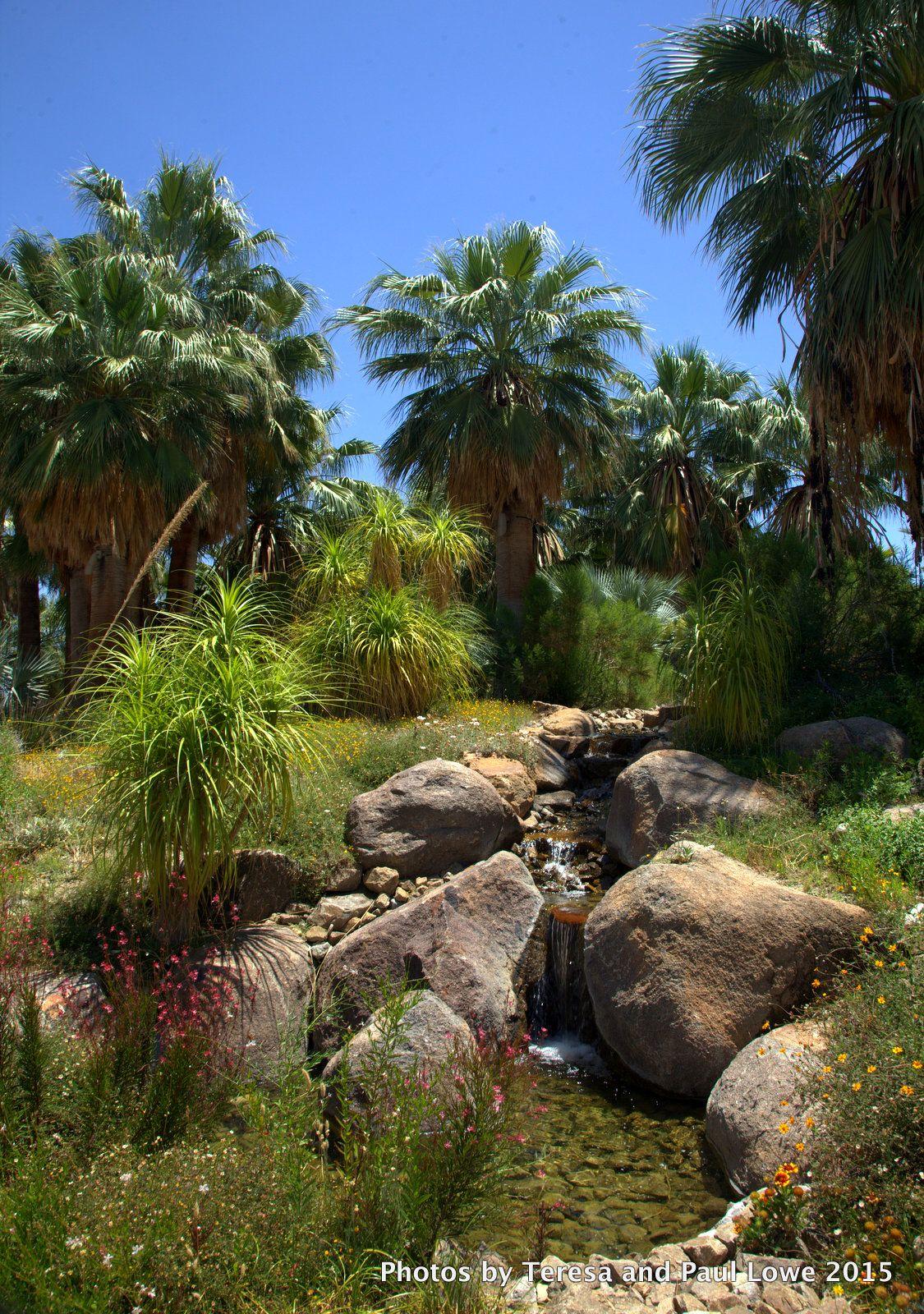 5ebfc41b6ef0ebc6741c2a8013f104c9 - The Living Desert Zoo And Gardens Palm Desert California