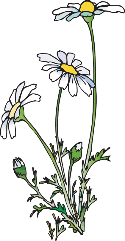 web design clip art flower drawings and drawings rh pinterest com daisies clip art free daisies clipart png