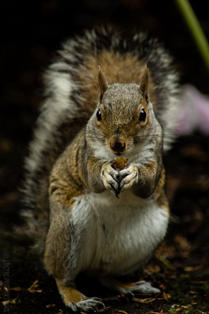 A squirrel from Sheffield Botanical Gardens. by Jason M Parrish