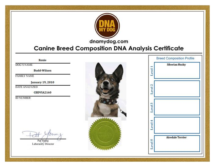 DNA My Dog Results Samples PETS - PETS, BEDS, TOYS, SAFETY - canine security officer sample resume