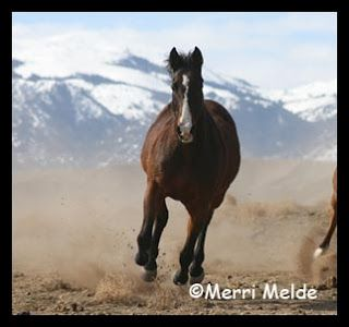 The Most Beautiful Horse on the Planet - my horse Stormy!