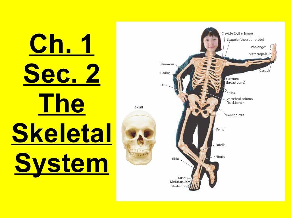 8th Grade Ch 1 Sec 2 Skeletal System