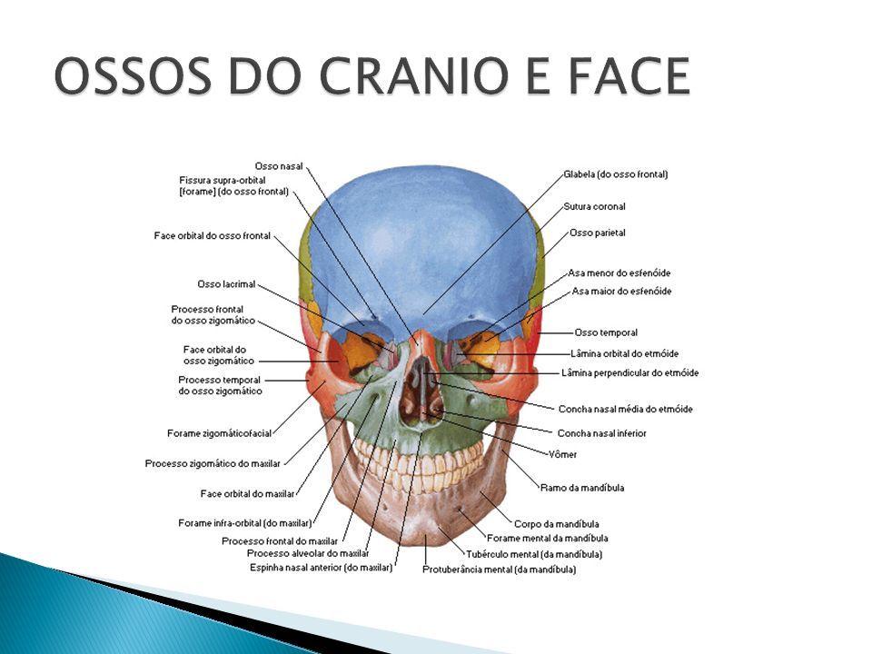 Dorable Verdad Importante En La Anatomía Festooning - Imágenes de ...