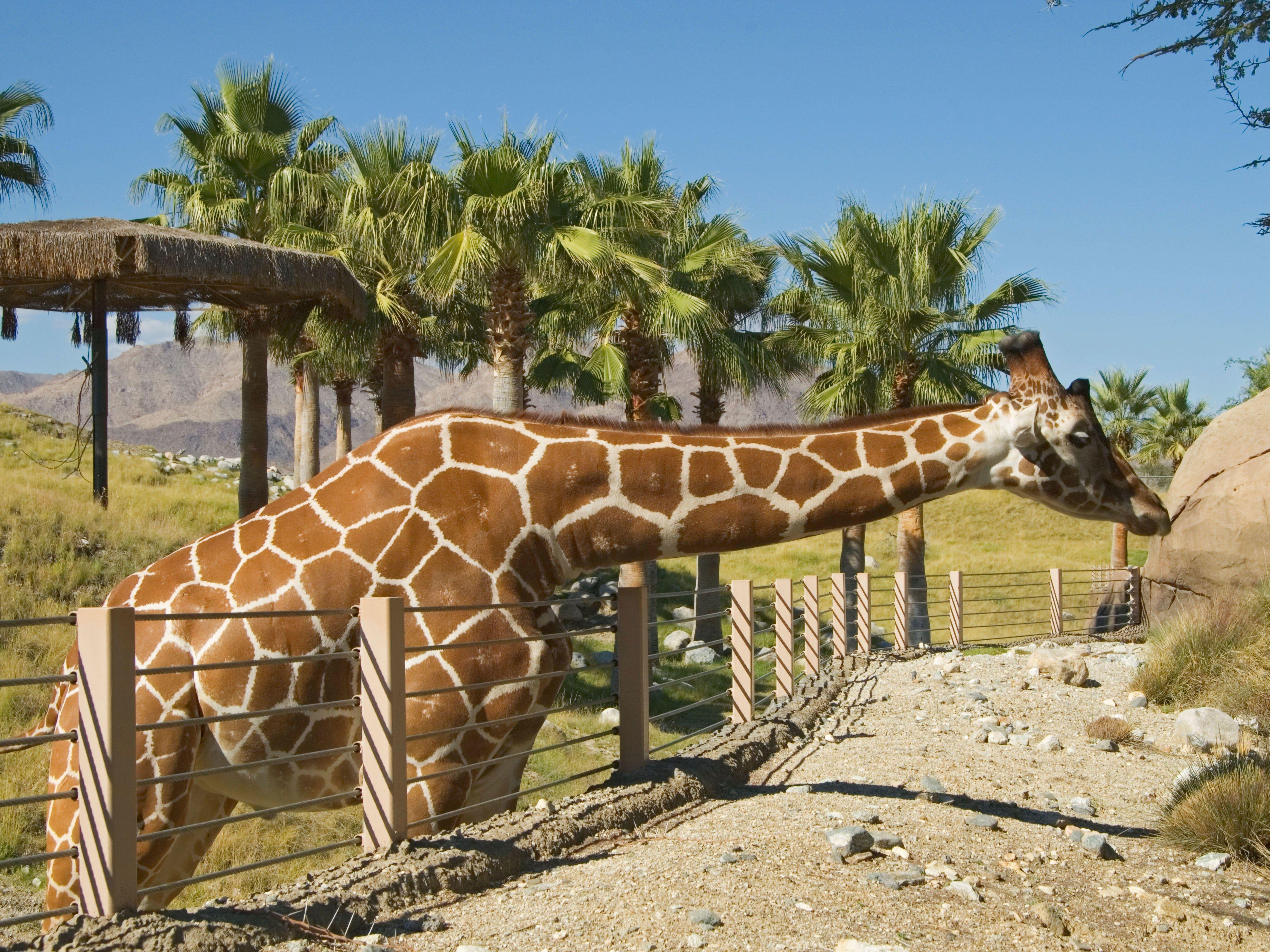 5ec20d50ed4c2bd947a85b29f47aba55 - The Living Desert Zoo And Gardens Tickets