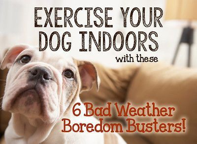 Exercise-Your-Dog-Inside-with-these-6-Bad-Weather-Boredom-Busters-
