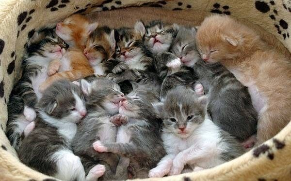 A group of kittens is called a kindle. | The 35 Cutest Facts Of All Time