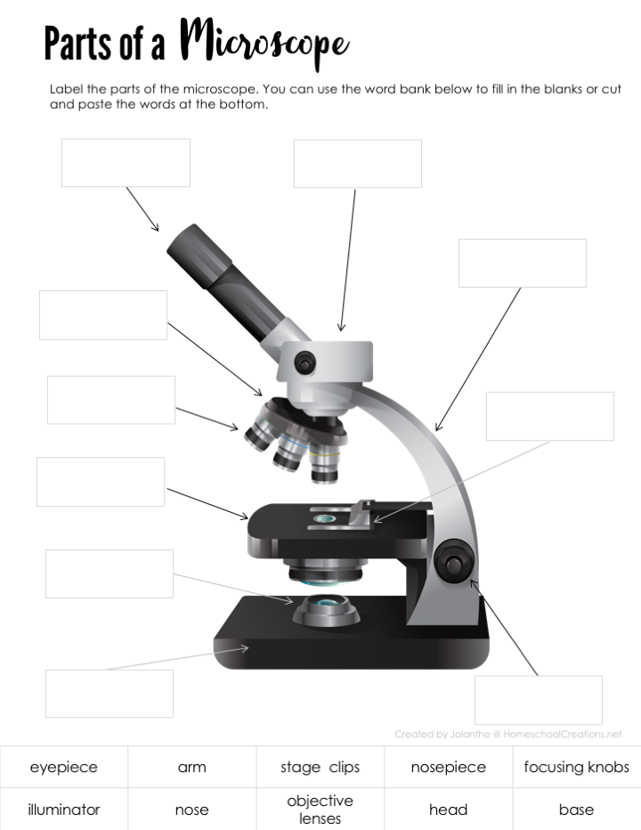 Parts of a Microscope - Free Printable | Biology lessons ...