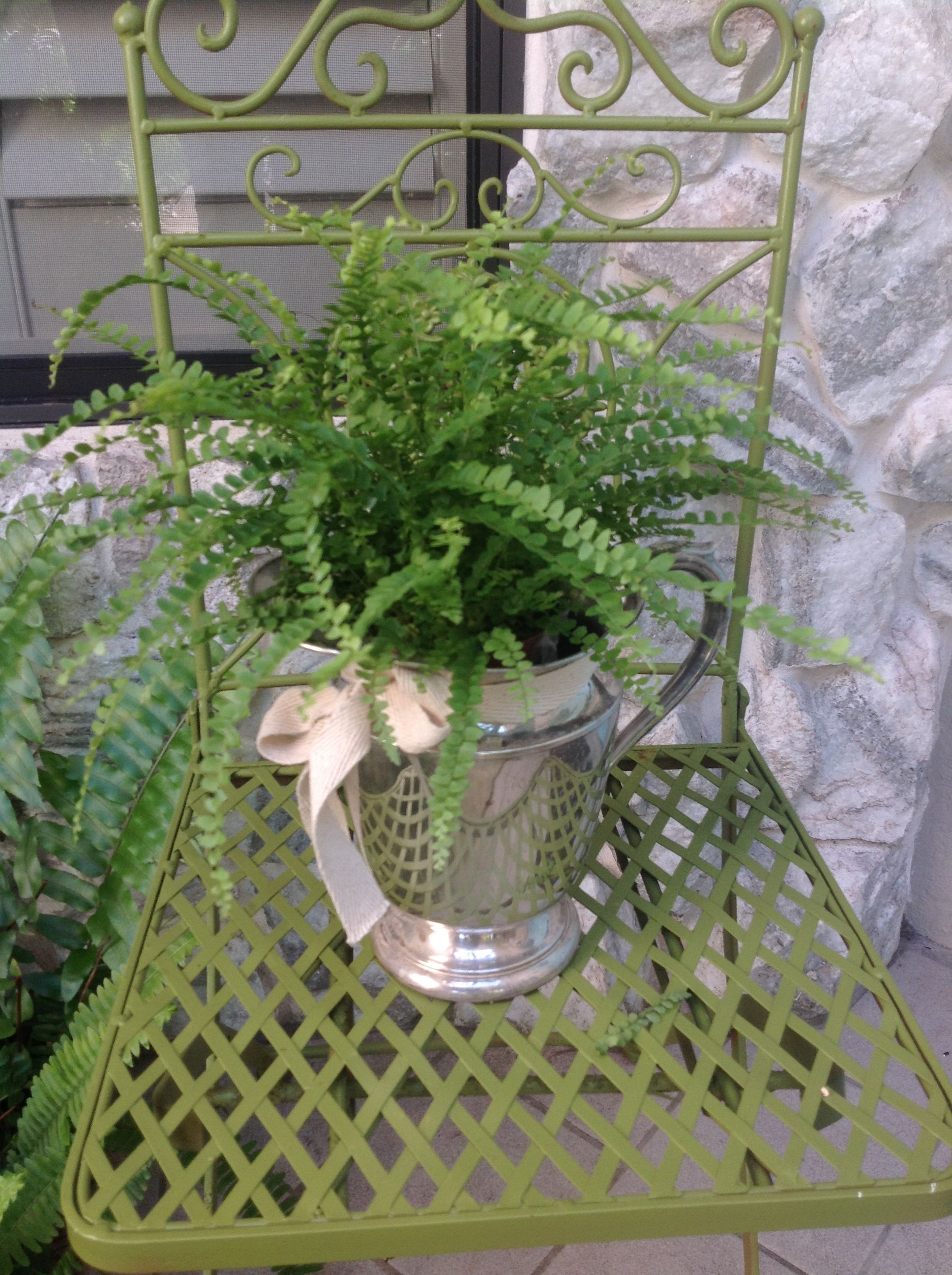I found this old Silver-plate Pitcher and turned it into a planter.      I polished the Pitcher, crumpled up a piece of foil and placed it inside the pitcher for the fern to sit on.  Wrapped the fern pot with a piece of cling wrap, placed it on top of the foil inside the pitcher,  added a tie/ribbon, and put it on the porch.   I just love bringing the inside outside.