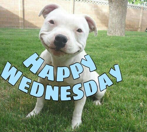Happy Wednesday | Happy Wednesday | Pinterest | Happy ...
