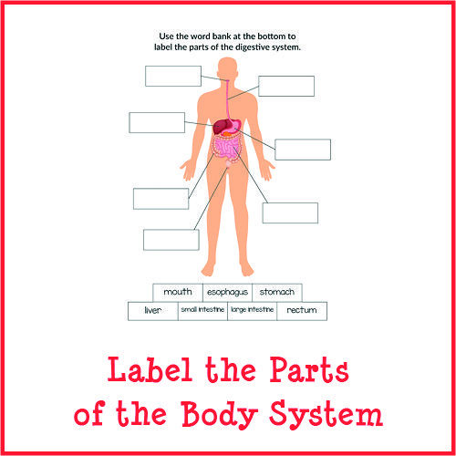 Label The Parts Of The Body System (With Images)
