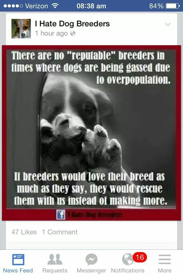 Dog Breeding Should Be Illegal More Animals In Shelters Are
