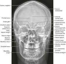 skull AP x-ray anatomy에 대한 이미지 검색결과 (With images ... X Ray Views Of Skull