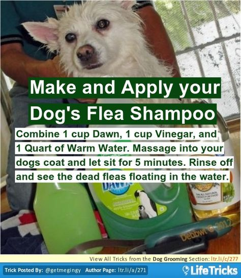 How To Get Rid Of Fleas In The House Video Tutorial Fleas Cat