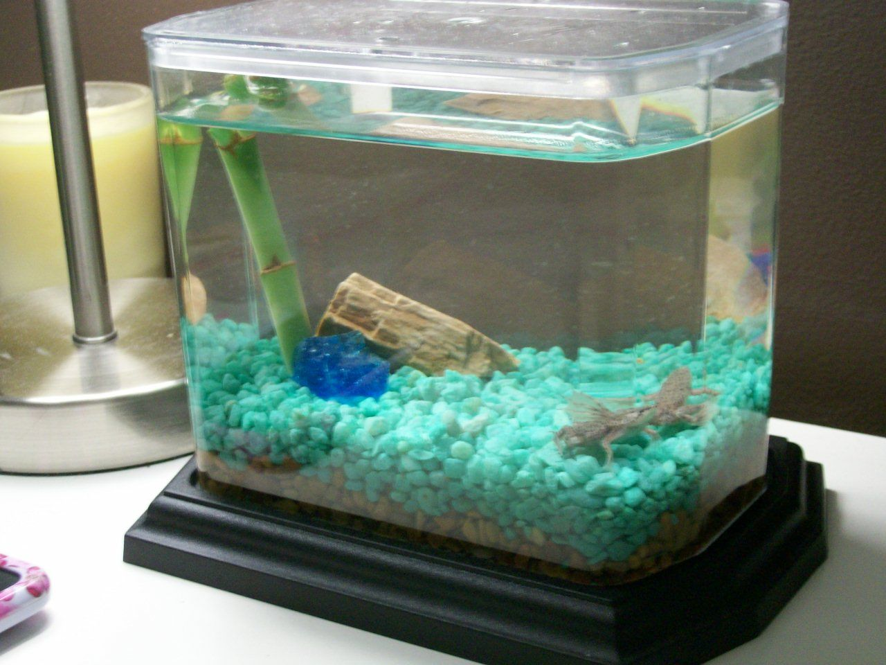 Cute little eco aquarium from wild creations company for Cute fish tanks