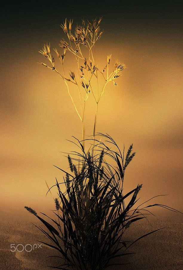 Golden Time by Otto Hütter on 500px