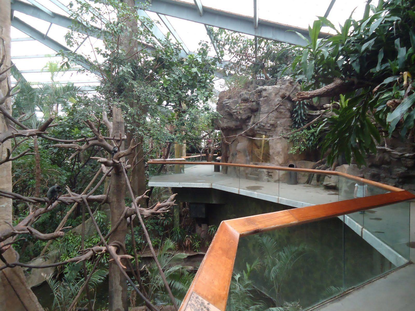 Exploring omaha lied jungle henry doorly zoo zoo zoological