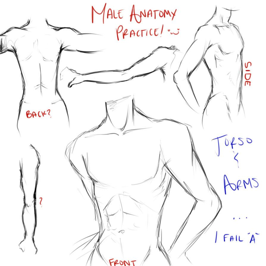 Practice: Male Anatomy (Torso and Arms) by Triple-A-XD-XP on ...