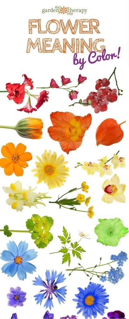 What Does Your Bouquet Say Flower Color Meaning And Symbolism
