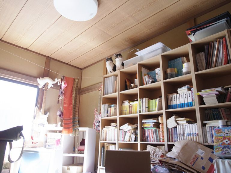 Caturday In Japan: The View From Above
