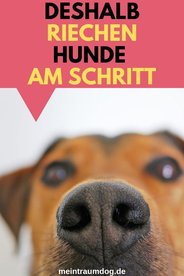 Wieso Riechen Hunde Einem Menschen Immer Am Schritt Diese Frage Werde Ich In Meinem Neuen Blogbeitrag Beantworten H Hunde Hunde Korpersprache Hunde Welpen