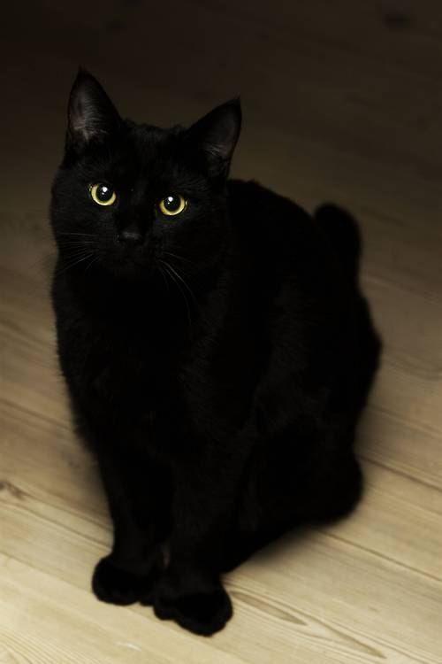 Strečing čierna mačička