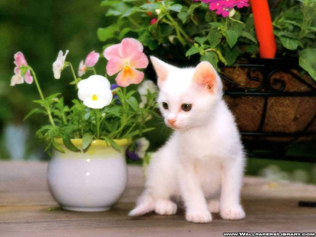 White Kitten Flowers Cat Picture Animal Pictures Wallpaper Kitten Wallpaper Kittens Cutest Cute Cat Wallpaper