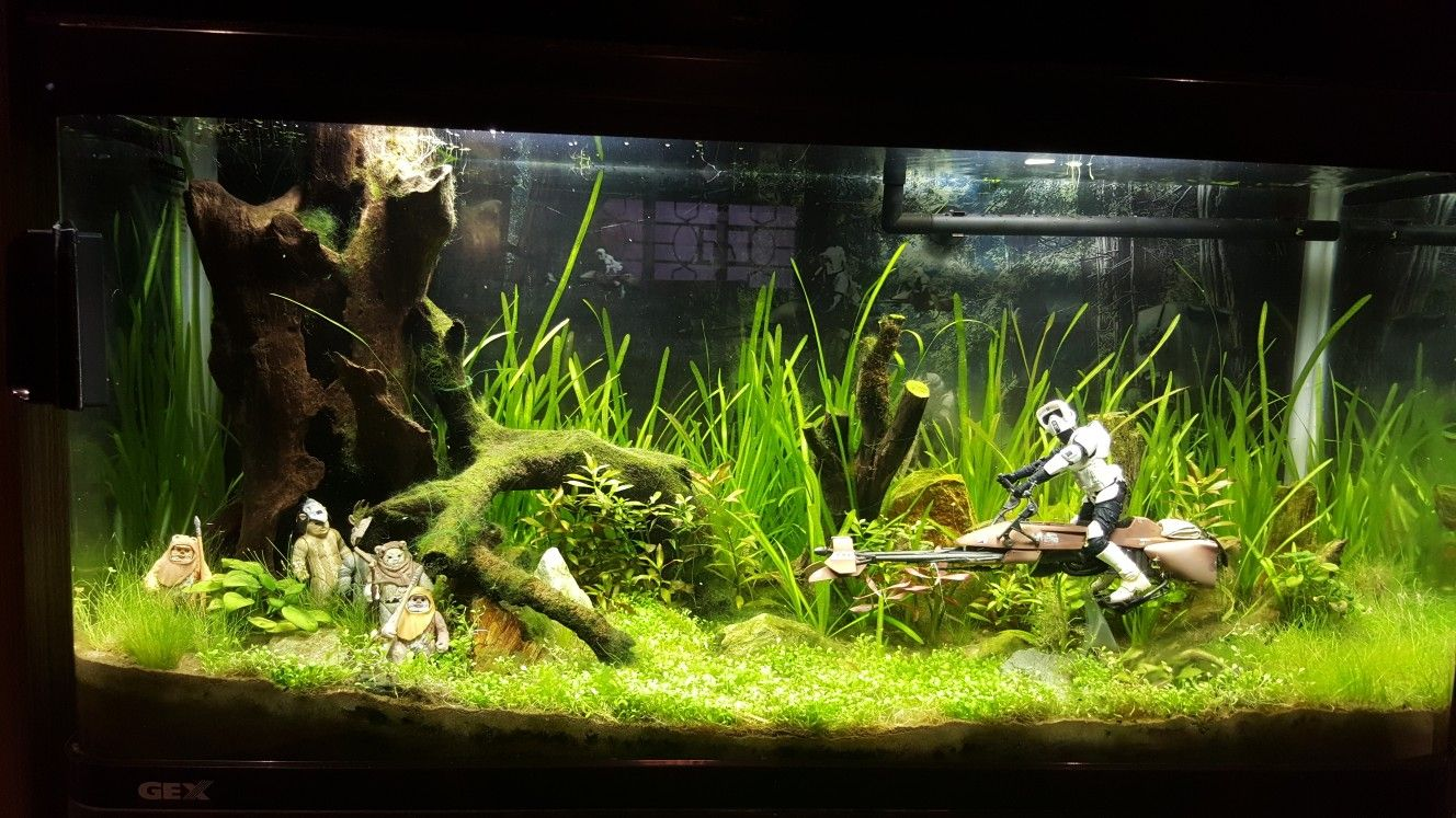 Planted Aquarium Starwars Theme My Collections Pinterest